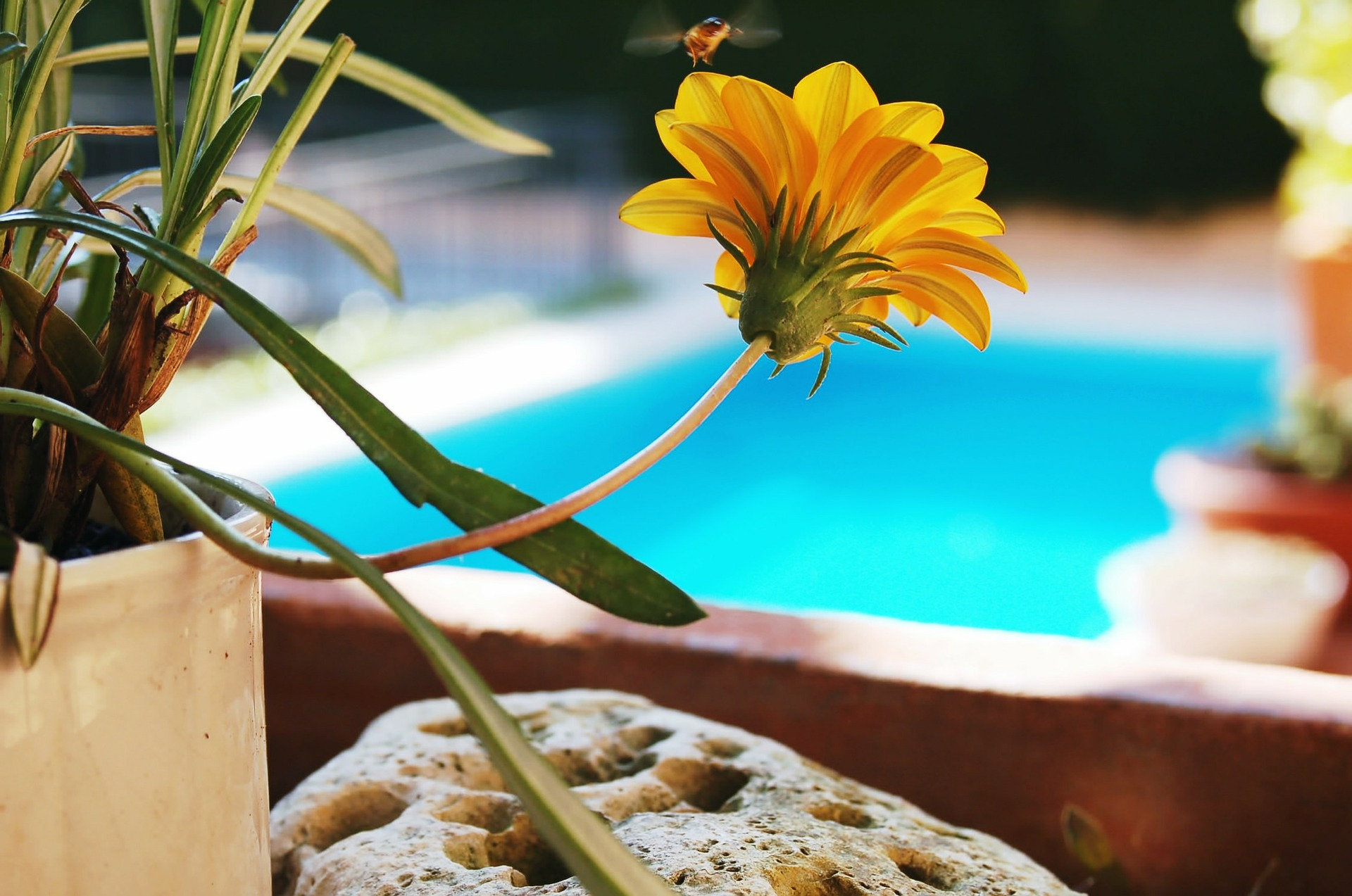 Mosquito Repelling Plants for your Swimming Pool and Backyard