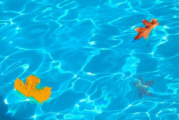 leaves-1721660_1280.jpg